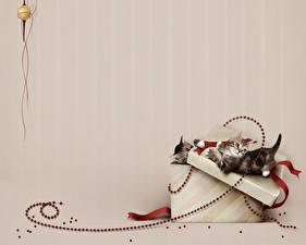 Обои Коты Украшения Цветной фон Коробка Котята