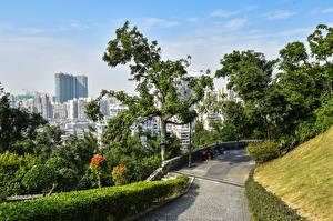 Картинки Китай Дома Дерево Кусты Macao город