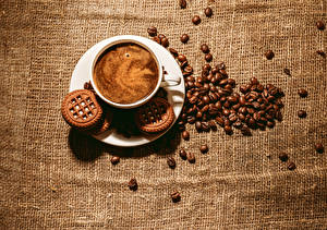 Фото Напитки Кофе Печенье Цветной фон Чашка Зерна Пища