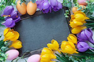Фотография Пасха Праздники Шафран Шаблон поздравительной открытки Яйца Цветы