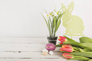 Фото Пасха Праздники Тюльпаны Нарциссы Доски Яйца