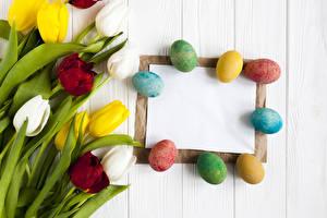 Фото Пасха Праздники Тюльпаны Доски Яйца Шаблон поздравительной открытки Цветы
