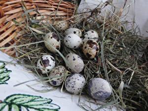 Фотография Яйца Солома Продукты питания