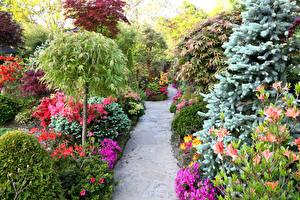 Фотографии Англия Сады Альстрёмерия Кусты Тропа Walsall Garden