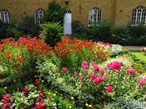 Картинки Англия Сады Маттиола Лондон Кусты Chumleigh Gardens Burgess Park Природа