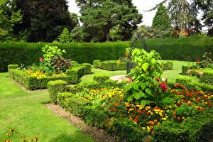 Фотография Англия Сады Бархатцы Лондон Кусты Дизайн Capel Manor Gardens Природа