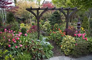 Фотографии Англия Сады Кусты Walsall Garden Природа