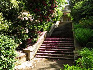 Фотографии Англия Парки Рододендрон Лондон Лестница Кусты Лепестки Hill Garden Природа