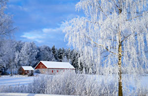 Фото Финляндия Дома Зимние Снег Деревья Paimio Природа