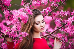 Картинка Цветущие деревья Ветки Шатенка Девушки