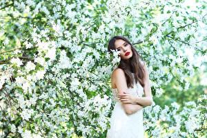 Фото Цветущие деревья Шатенка Взгляд Девушки