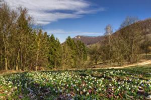 Фото Германия Весна Подснежники Дерева Tuerkheim Природа