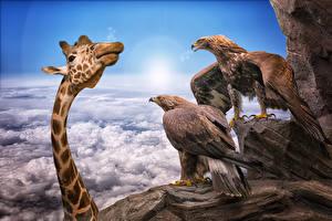 Фото Жирафы Орлы Смешные