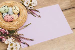 Фото Праздники Пасха Хризантемы Шаблон поздравительной открытки Гнездо Яйца
