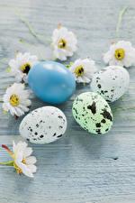 Картинка Праздники Пасха Хризантемы Доски Яйца