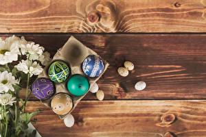 Фотографии Праздники Пасха Хризантемы Доски Яйца