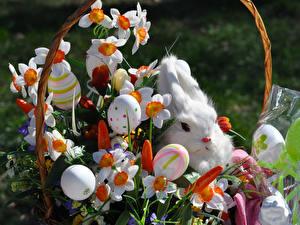 Фотографии Праздники Пасха Кролики Нарциссы Яйца