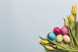 Фотография Праздники Пасха Тюльпан Цветной фон Яйца Цветы