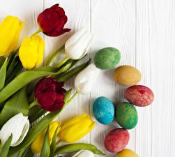 Фото Праздники Пасха Тюльпаны Яиц Разноцветные Цветы