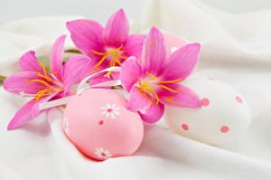Фото Праздники Пасха Тюльпаны Яйца Розовый