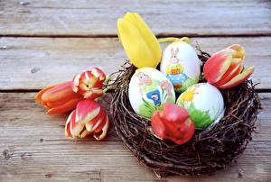 Картинки Праздники Пасха Тюльпаны Доски Яйца Гнездо