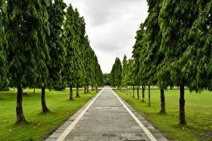 Фотография Индонезия Парки Аллея Деревья Bali Природа