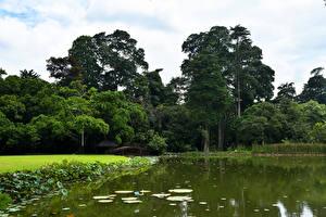 Картинка Индонезия Парки Пруд Деревья Bogor Природа