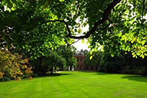 Картинка Парк Газоне На ветке Capel Manor Gardens Природа