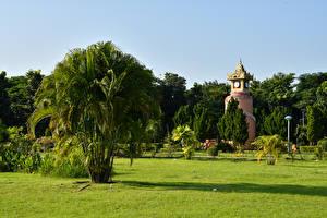 Картинки Парки Пальмы Газон Naypyidaw Myanmar Природа