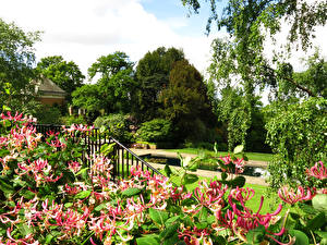 Фото Парки Пруд Лондон Hill Garden Природа