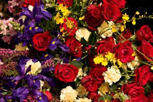 Картинка Розы Ирисы Гвоздики Орхидеи