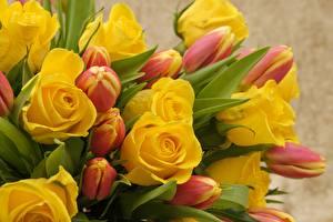 Картинка Розы Тюльпаны Желтый Цветы