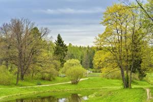 Обои Россия Санкт-Петербург Парки Весна Деревья Кусты Pavlovsk Природа