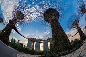 Картинка Сингапур Парки Небо Дизайн Вид снизу Gardens by the Bay Природа