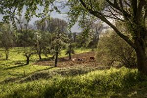 Картинка Весенние Цветущие деревья Луга Лошади Природа