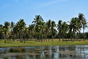 Картинки Таиланд Тропики Парки Побережье Пальмы Phraya Nakhon Cave Природа