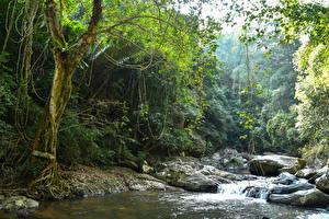 Картинки Таиланд Тропики Парки Леса Речка Водопады Камень Pala-U Waterfall