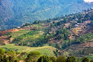 Картинка Тропики Поля Здания Kathmandu Nepal