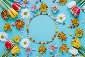 Фотографии Тюльпаны Хризантемы Конфеты Цветной фон Дизайн