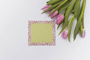 Картинки Тюльпаны Белый фон Шаблон поздравительной открытки Розовый Цветы