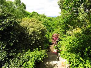 Фотографии Великобритания Парки Лондон Лестница Кусты Hill Garden Природа
