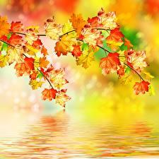 Фотография Осень Листва Ветки Природа