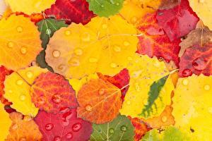 Картинки Осенние Листва Капли