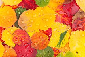 Картинки Осенние Листва Капли Природа
