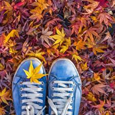 Картинка Осенние Кеды Листва