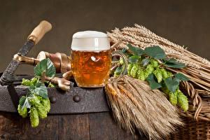 Картинки Пиво Хмель Кружки Пене Колосья Еда