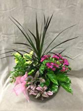 Фотография Букеты Каладиум Листва Цветы
