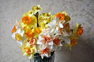 Фотография Букет Нарциссы Цветы