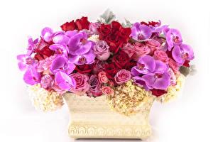 Обои Букеты Орхидеи Розы Гортензия Белый фон Цветы