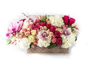 Обои Букеты Розы Орхидеи Гортензия Белый фон Цветы